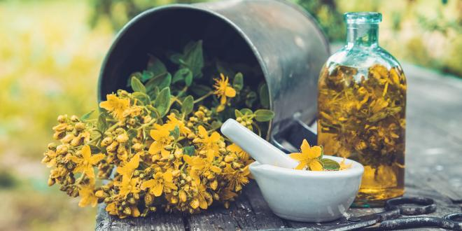 St. John's Wort in a metal bucket laying on its side next to a glass bottle of tincture and a mortar and pestle..